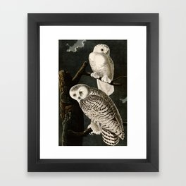 Snowy Owl Vintage Bird Illustration - Audubon Framed Art Print