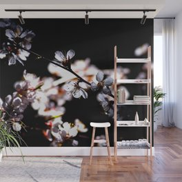 Japanese Apricot Blossoms Against The Black Background Wall Mural