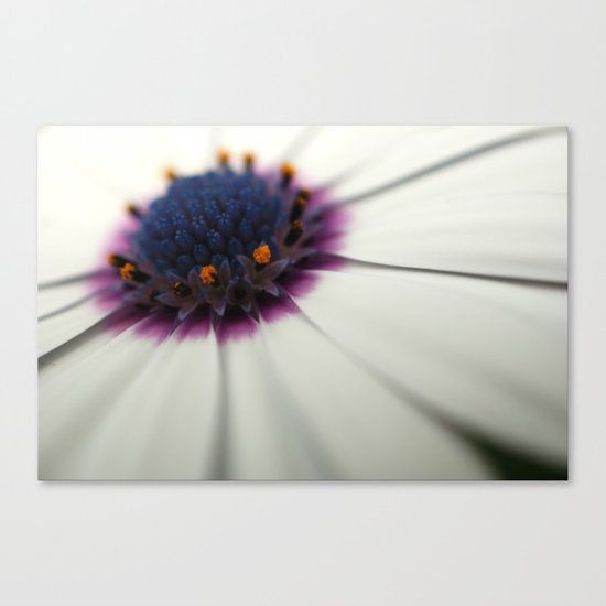 Roses are red, Violets are white..? Canvas Print