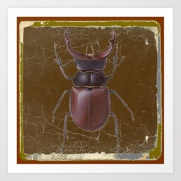 ANTIQUE STAG-HORNED BEETLE BROWN ART Art Print