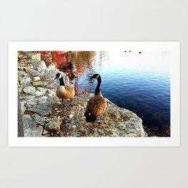 Gorgeous Geese Art Print