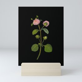 Lantana Involucrata Mary Delany Delicate Paper Flower Collage Black Background Floral Botanical Mini Art Print