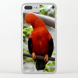 Tunqui:Gallito de las rocas Clear iPhone Case