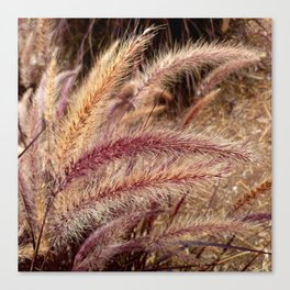 Fountain Grass inthe wind Canvas Print