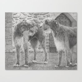 Irish wolfhounds - Gentle giants Canvas Print