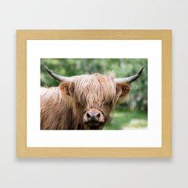 Portrait of a cute Scottish Highland Cattle Framed Art Print