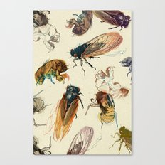 summer cicadas Canvas Print