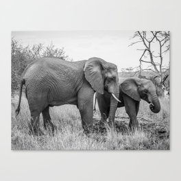 Grazing Elephants Canvas Print