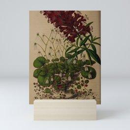 Flower lysimachia nutans saxifraga sarmentosa9 Mini Art Print