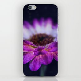 Purple Gerbera Daisy Closeup iPhone Skin
