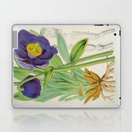Meconopsis Simplicifolia Vintage Botanical Floral Flower Plant Scientific Laptop & iPad Skin