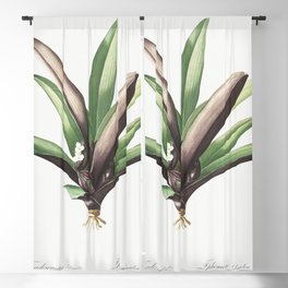 Boat lily  from Les liliacees (1805) by Pierre-Joseph Redoute Blackout Curtain