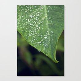 Misty Leaf Canvas Print