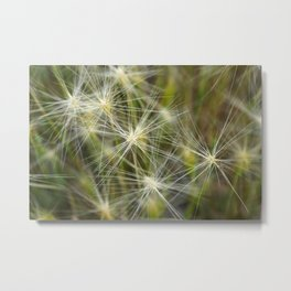 Late summer cheatgrass Metal Print