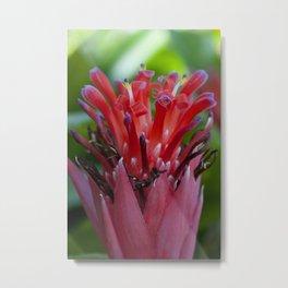 Bromeliads Metal Print