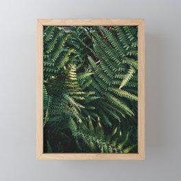 Fern fronds Framed Mini Art Print