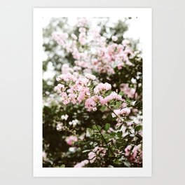Crape Myrtle in New Orleans Art Print
