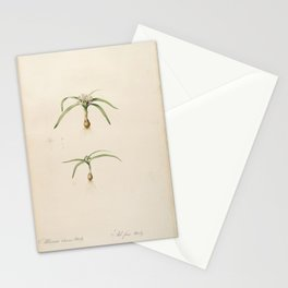 allium chamae-moly Redoute Roses 2 Stationery Cards