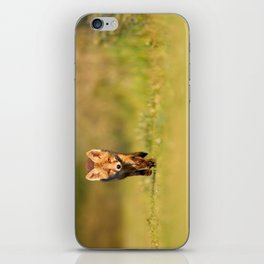 The New Kit on the Grass - Red Fox Cub iPhone Skin
