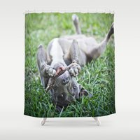 pit bull Shower Curtains featuring Pit Bull Puppy by Paw Prints By Jamie