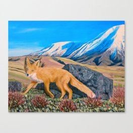 Red Fox in The Rocky Mountains Canvas Print