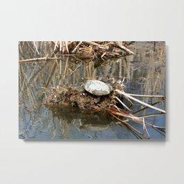 Painted Turtle on Mud and Reeds Metal Print