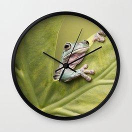 White's Tree Frog Wall Clock