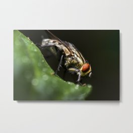 Grey Flesh Fly Metal Print