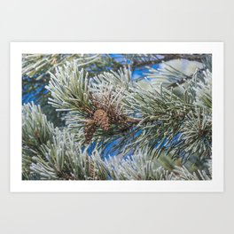 Christmas frost Art Print