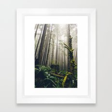 Rainforest Fog Framed Art Print