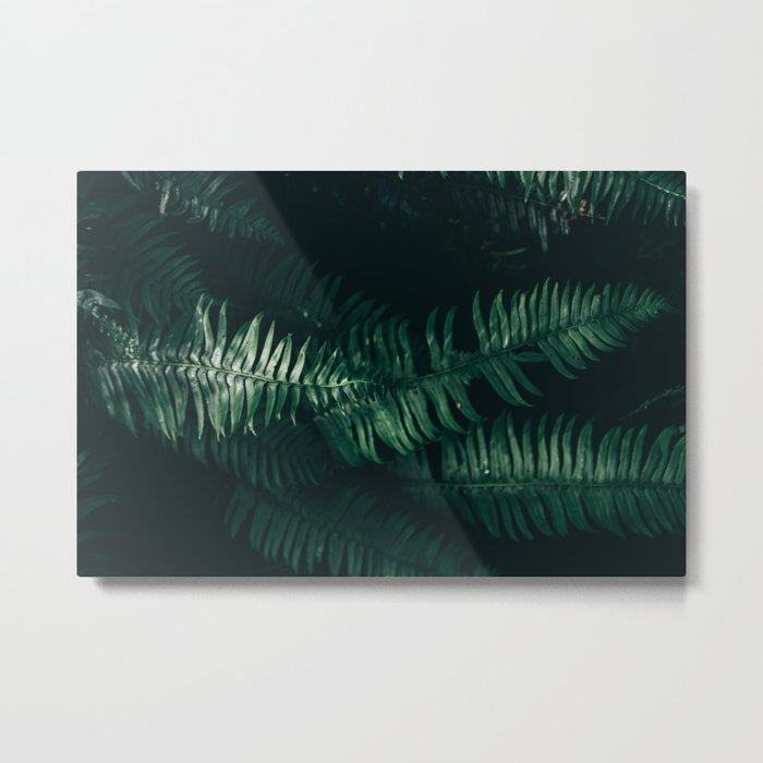 Ferns III Metal Print