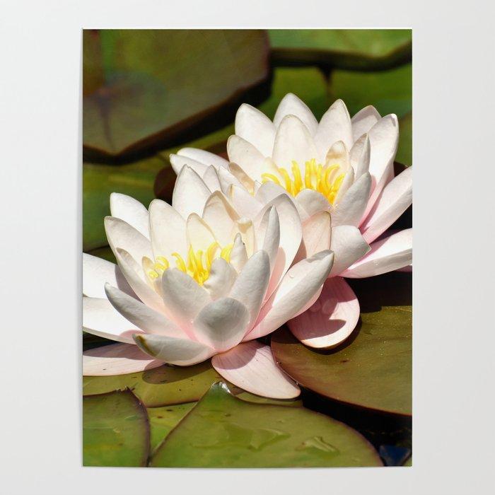 Lotus Flower Poster By Erikakai Society6