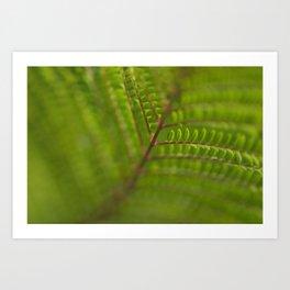 Jacaronda Mimosifolia Serie 1 Art Print