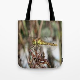 Brown Dragonfly On Husks With Garden Background Tote Bag