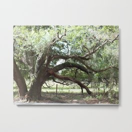 Brandon Oaks Metal Print