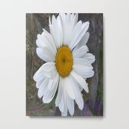 Just a Daisy Metal Print