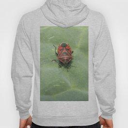 red bug on a leaf Hoody