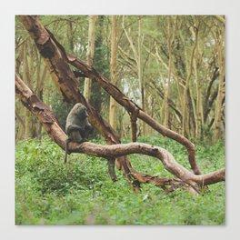 Wild Baboon in Kenya Canvas Print