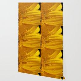 Yellow Gerber Daisy Petals Wallpaper