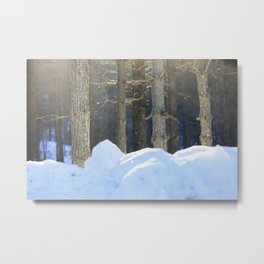 Evening in the Forest Metal Print