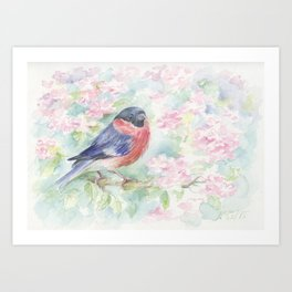 Wildlife Singing bird Spring scene Bullfinch in the blossom Watercolor painting Pastel colors decor Art Print