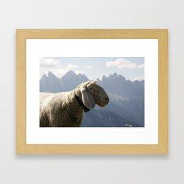 Sheep Before South Tyrol Mountains Framed Art Print
