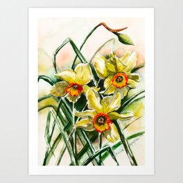 Daffodil Quartet Watercolor Painting Art Print