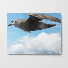 Seagull Metal Print