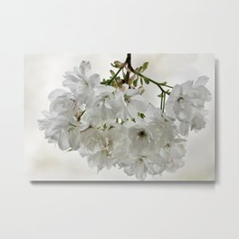 SPRING BLOSSOMS - IN WHITE - IN MEMORY OF MACKENZIE Metal Print