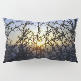 Pacific Coast Sunset Through the Trees at Torrey Pines State Beach, California - Color Photo Pillow Sham
