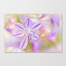 Summer dance - macro  floral photography Canvas Print