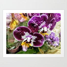 Wine Orchids Art Print
