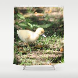Baby Duckling strolling on a lawn Shower Curtain