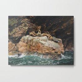 Sea lions in Ballestas Islands, Peru Metal Print